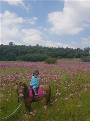 Horse riding lessons, trail rides and outrides.