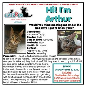 Cats and kittens to adopt from CatzRus. Come get to know Arthur - our emerging love-bug!