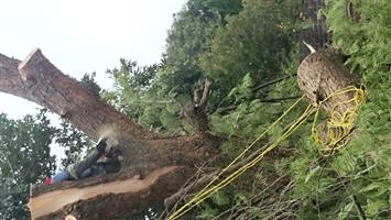 GP TREE FELLING AND STUMP REMOVAL