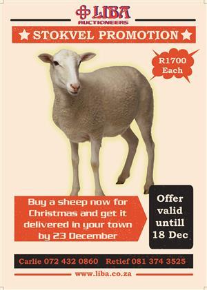 Liba stokvel sheep offer