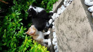 2 Adorable Kittens