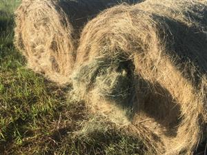 Eragrostis bales in Ermelo area