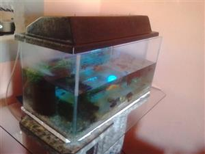 61x31x31cm Rectangle fish tank with canopy