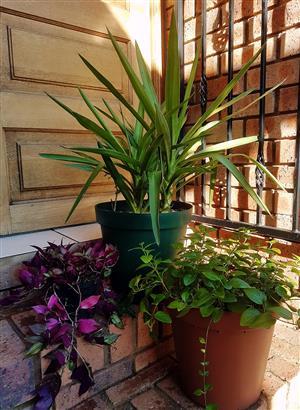 3 Stunning Flowerpots