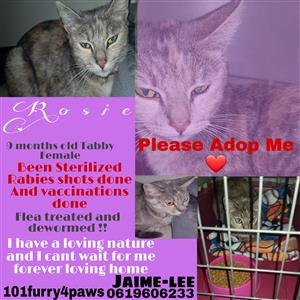 Cats up for adoption need homes ASAP