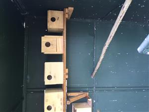 Show budgie nest for sale