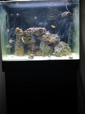 Marine Aquarium for Sale in East Rand