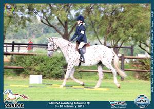 PRICE REDUCED - Stunning registered Appaloosa mare
