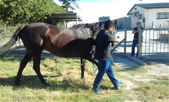 Stunnig Horse for sale