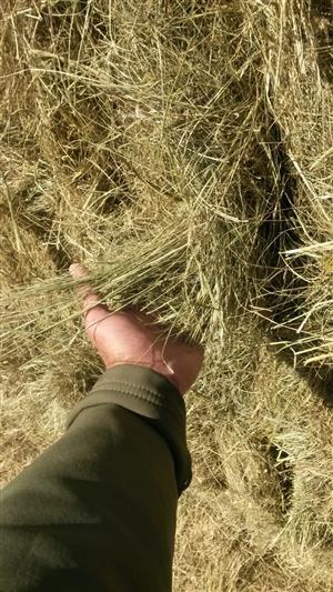Eragrostis bales in Vanderbijlpark
