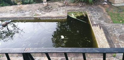 Green pool?Need pool Maintenance Repairs Rock and Water Features