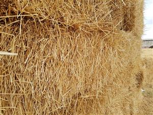 Bales Lusern, wheat straw, oat straw - weight between 25kg and 30kg