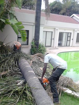 Tree Felling Services