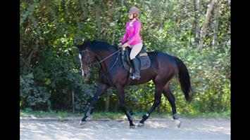 Magnificently stunning Tb mare
