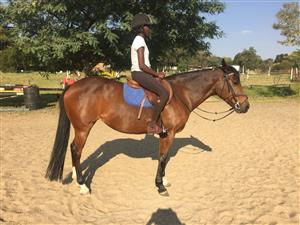 Stunning welsh type pony for sale
