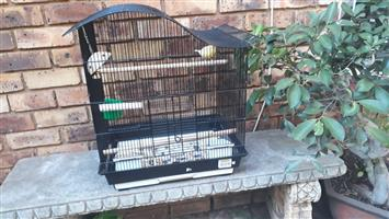 Unique bird cage for sale