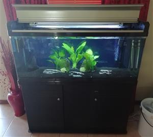Boyu 250L fish tank