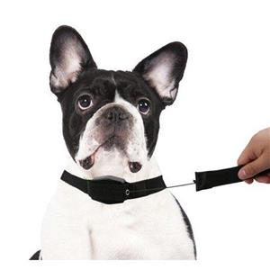 2-in-1 Retractable Leash And Collar