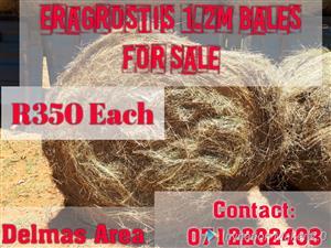 1.2m Eragrostis Bales For Sale