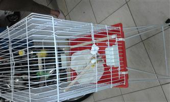 Bird Cage for 2 or 3 Budgies