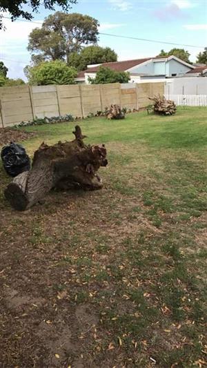 Stumps uprooting in Overbaakens, Port Elizabeth