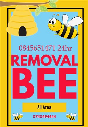 bee / wasp removal