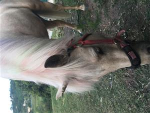 Ponies for party hire