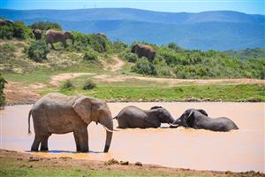 Addo Accommodation Eastern Cape