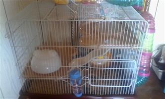 Female hamster with cage.