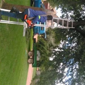 insured Tree felling pretoria