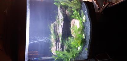 Buyo marine aquarium