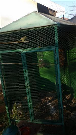 Bird Aviary for Sale