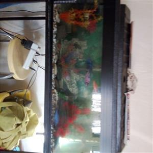 3 Ft Fishtank + Accessories