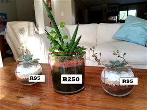 Various pot plants and plants for sale