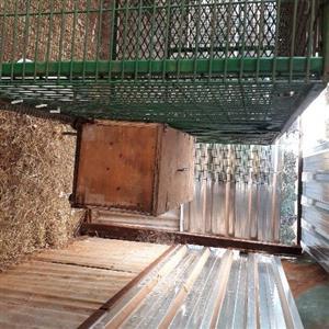 bunnie cage