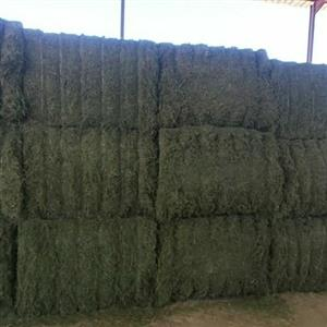 Lucerne and other feeds