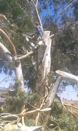 Tree Felling and Stump Removal. 0614839543