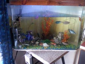 Fish Tank and all for sale