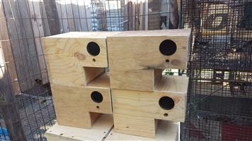 Plywood breeding boxes for lovebirds