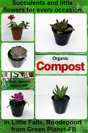 Organic Compost, Kraal Manure, Succulent plants and little flowers