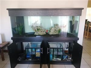 Fish Tank and Canopy
