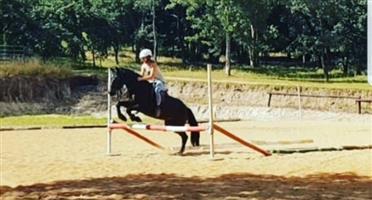 Child friendly horse for sale (neg)