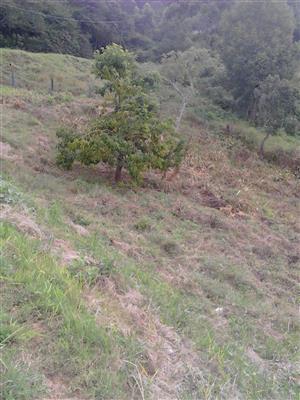 Bothas Hill serviced plots