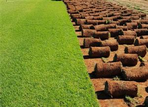 Quality instant lawn, we supply, deliver and install all types of lawn at best prices