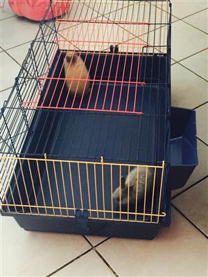 Rabbit cage for sal