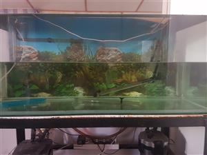 4ft 350L tank with plenty of accessories