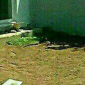 Evergreen,LM & Kikuyu Instant Lawn:0812690961