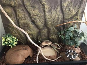 Very attractive reptile / snake cage with accessories for sale
