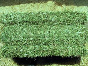 Lucerne Bales Teff & Eragrostis Hay Bales