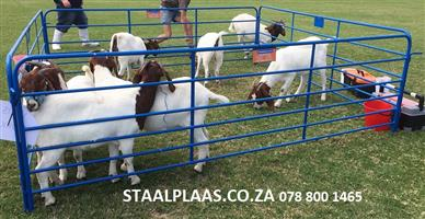 Skaap Hekkies / Sheep Hurdles